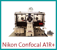 Nikon Confocal A1r